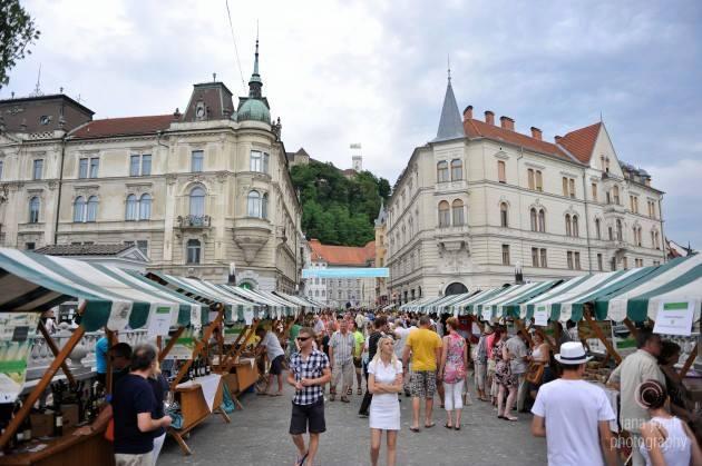 Ljubljana - vinska pot